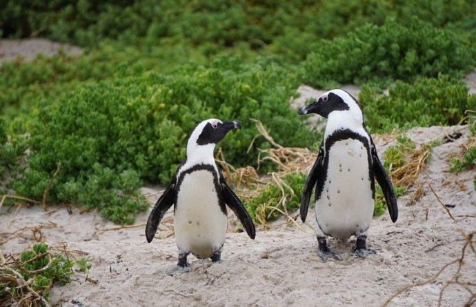 Общество: В Британии смотритель зоопарка продавал пингвинов и цапель через Facebook