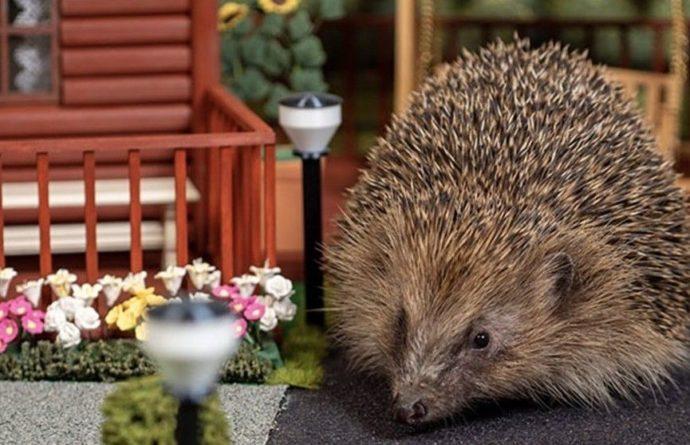 Общество: В Великобритании открылся первый парк отдыха для ежей