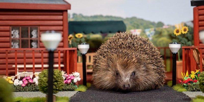 Общество: В Великобритании создали первый в мире парк отдыха для ежей — видео