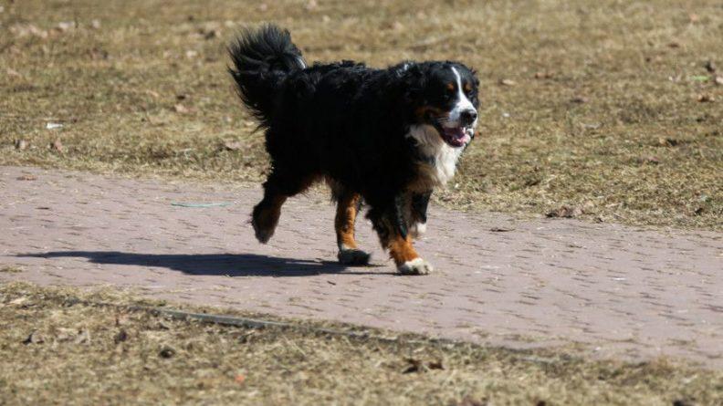 Общество: В Великобритании на поддержку собачьих бегов выделят миллион фунтов