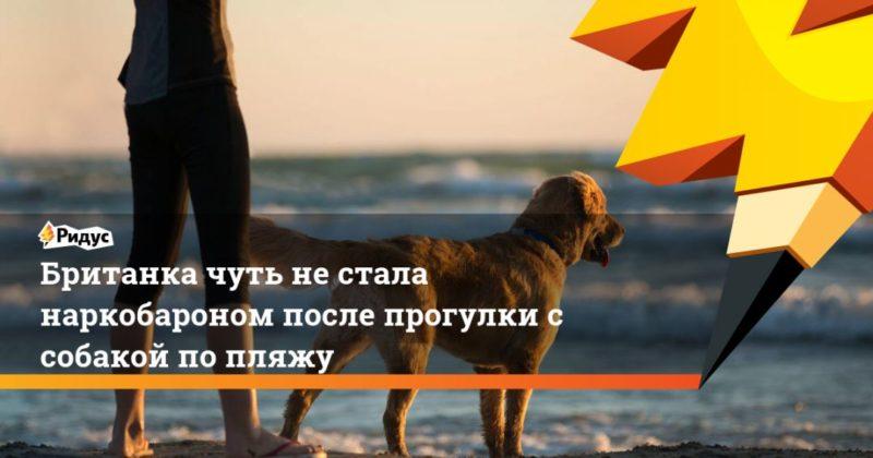 Общество: Британка чуть не стала наркобароном после прогулки с собакой по пляжу