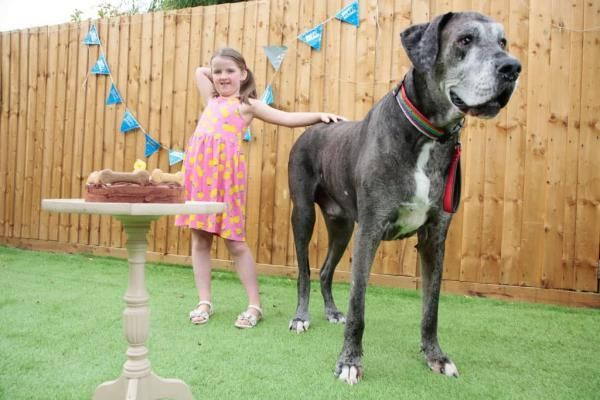 Общество: В Великобритании умерла самая высокая собака в мире