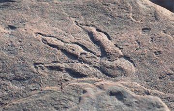 Общество: В Великобритании четырехлетняя девочка нашла след динозавра