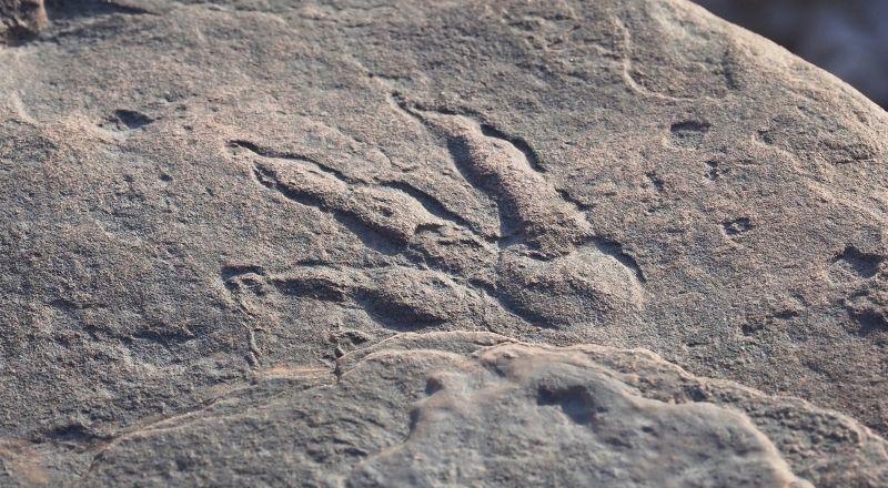 Общество: В Британии на пляже случайно обнаружили след динозавра, которому 220 млн лет: фото