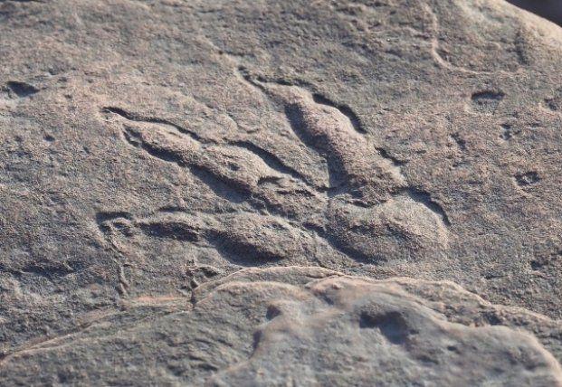 Общество: В Британии случайно обнаружили след динозавра, которому 220 млн лет
