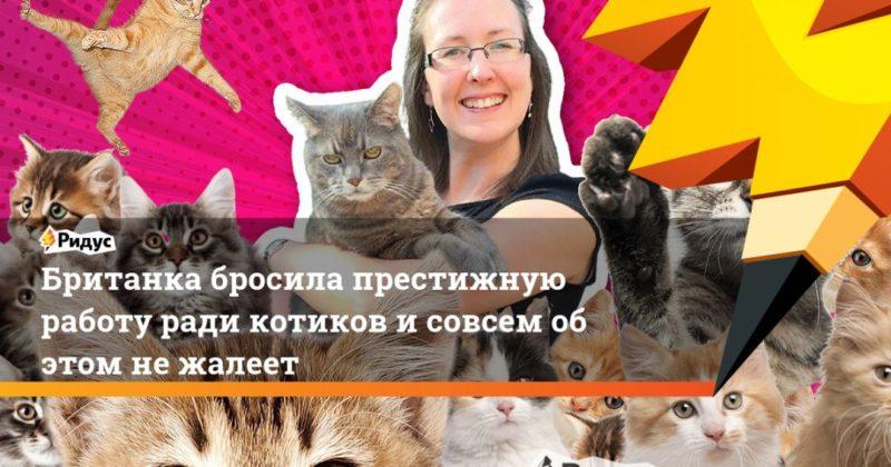 Общество: Британка бросила престижную работу ради котиков и совсем об этом не жалеет