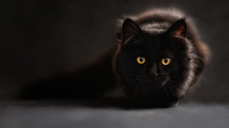 Общество: Британка бросила госслужбу и стала кошачьим переводчиком