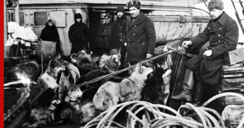 Общество: Красный Врангель: как советские моряки не отдали американцам и англичанам северный остров
