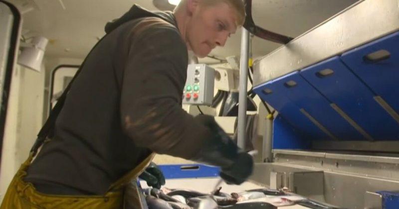 Общество: Великобритания получила разрешение на импорт рыбы в Украину - Госпотребслужба