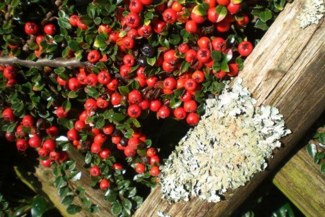 Общество: В Британии обнаружили поглощающее автовыхлопы растение