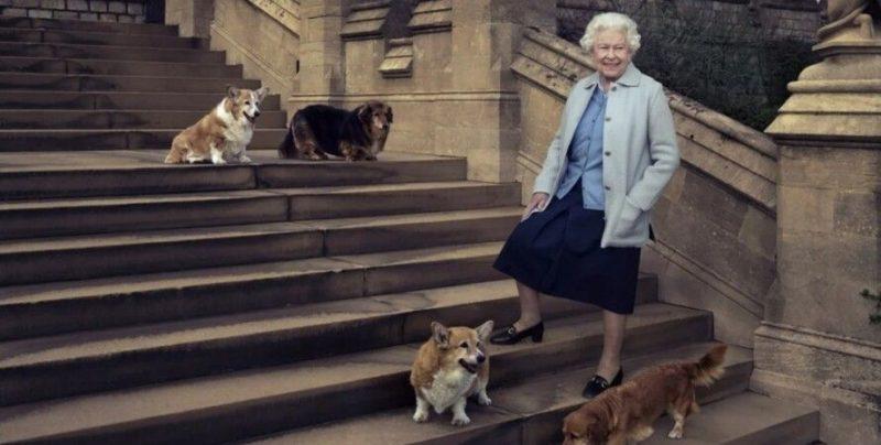 Общество: Королеве Великобритании подарили двух щенков корги