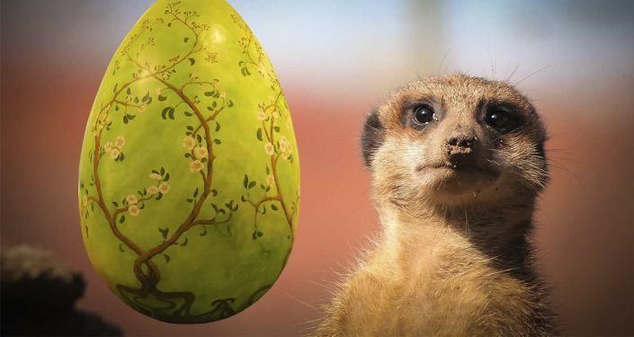 Общество: Охота на пасхальные яйца: обитателям зоопарка в Лондоне устроили сюрприз – видео