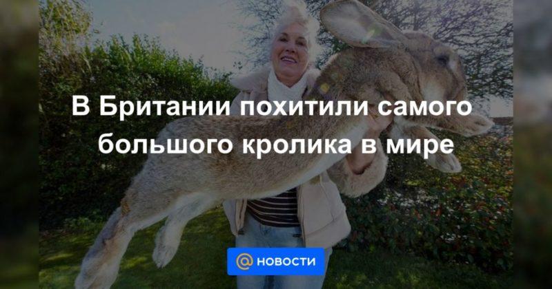 Общество: В Британии похитили самого большого кролика в мире