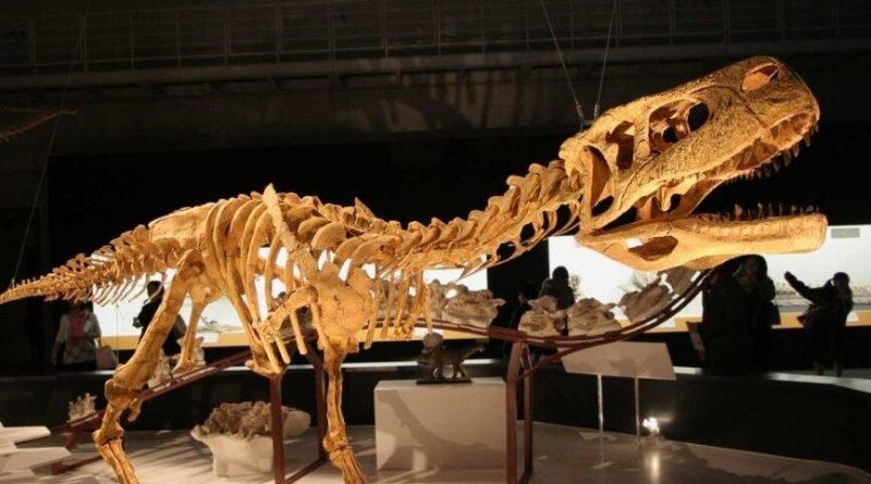 Общество: Англичанка наткнулась на след динозавра во время сбора моллюсков