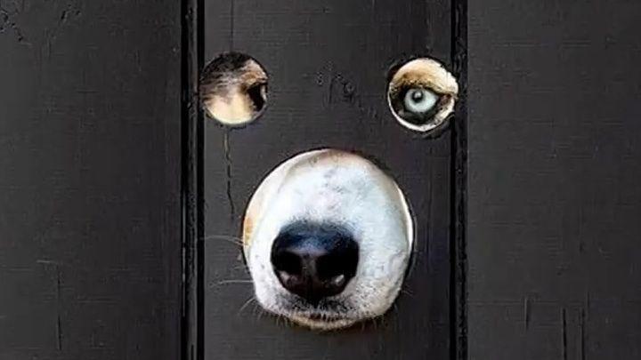 Общество: Видео из Сети. Британец просверлил дыры в заборе, чтобы его собаки наблюдали за улицей