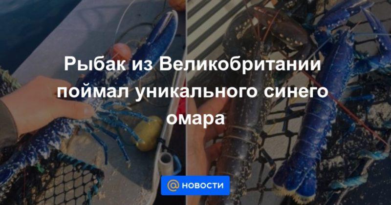 Общество: Рыбак из Великобритании поймал уникального синего омара