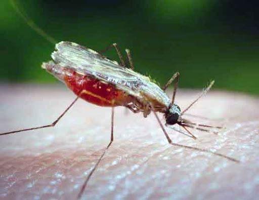 Общество: Великобритания объявила об успешных испытаниях вакцины от малярии. Ее эффективность составляет 77%