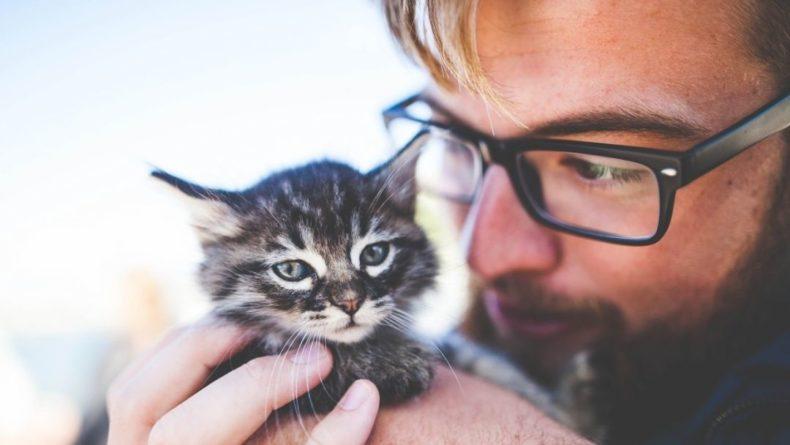 Общество: Котенок в Великобритании заразился коронавирусом от хозяина