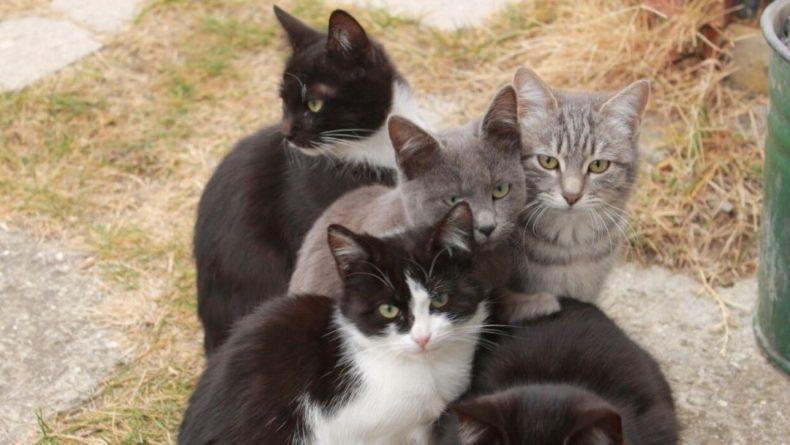 Общество: В Великобритании подтвердили случаи передачи коронавируса от человека к кошкам