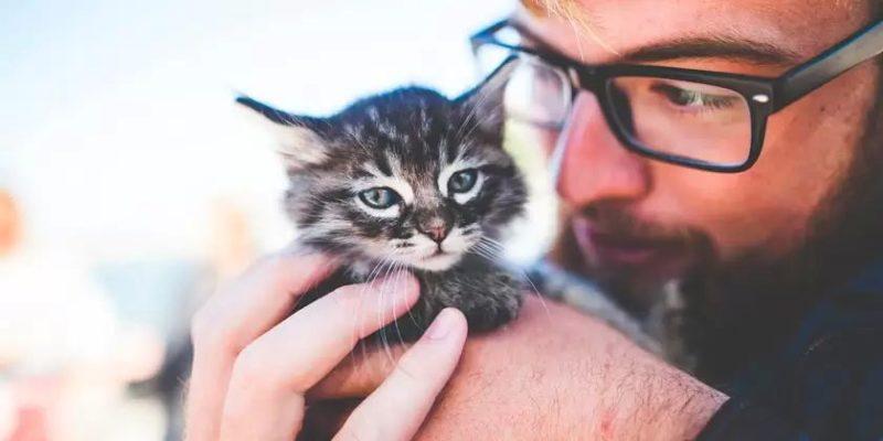 Общество: В Великобритании выявлены случаи передачи коронавируса от человека к кошке