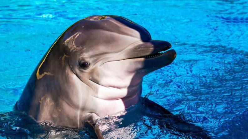 Общество: Любовь не малина: женщина из Великобритании оплакивает смерть мужа-дельфина