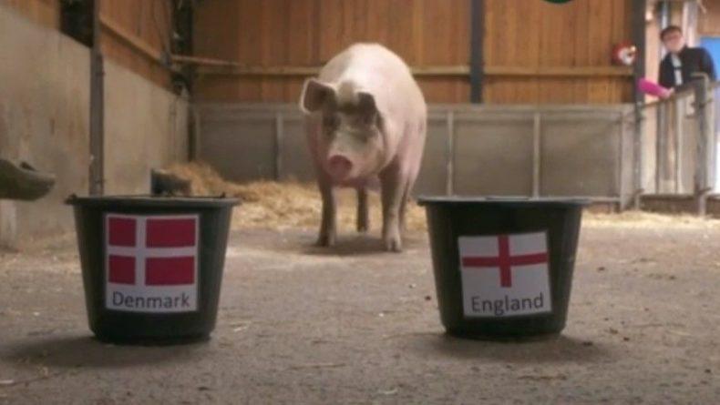 Общество: Свинья-оракул выбрала победителя матча Англия — Дания на Евро-2020