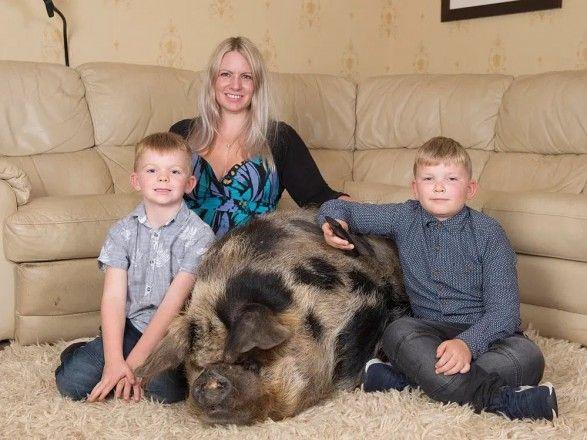 Общество: В Англии женщина воспитывает дома свинью весом 222 кг