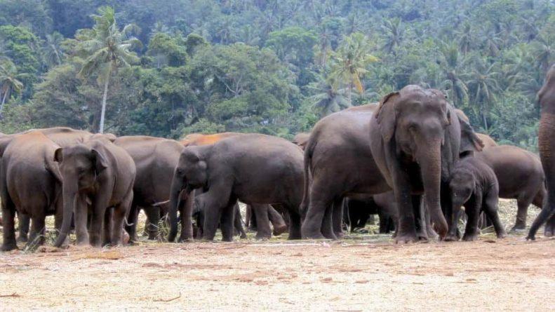 Общество: Из Англии в Африку переселят стадо слонов и мира
