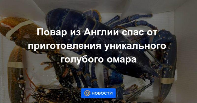 Общество: Повар из Англии спас от приготовления уникального голубого омара
