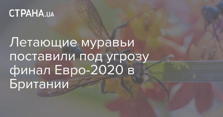 Общество: Летающие муравьи поставили под угрозу финал Евро-2020 в Британии