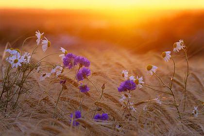 Общество: В Англии перестали косить траву