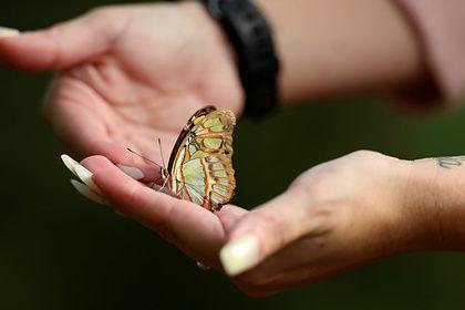 Общество: Британцы обеспокоились количеством бабочек
