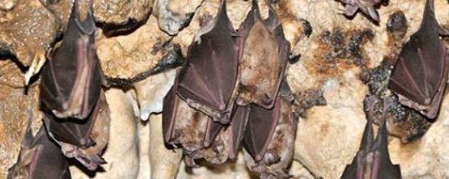 Общество: У летучих мышей в Британии обнаружили новый коронавирус
