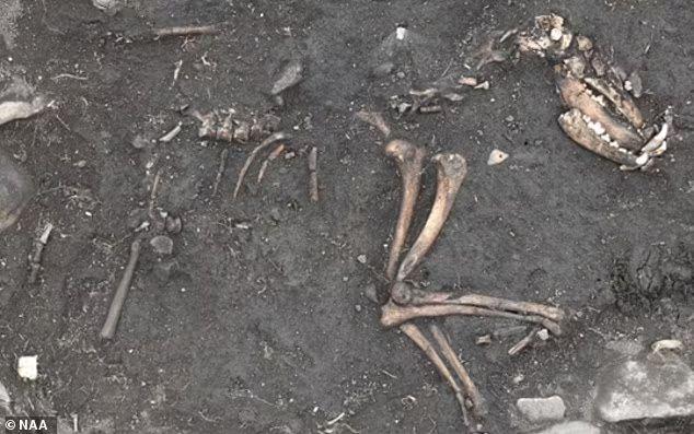 Общество: В Британии нашли сокровищницу с уникальными артефактами - археологи в восторге: фото