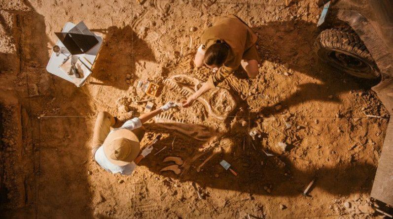 Общество: Окаменелости обитателей древнего моря найдены в Великобритании