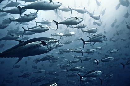 Общество: В Великобритании грязный воздух превратят в корм для рыб