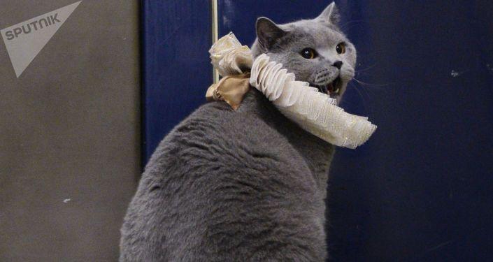 Общество: В Британии вынесли приговор серийному убийце кошек