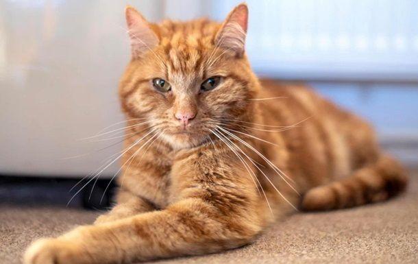 Общество: В Британии серийного убийцу котов приговорили к пяти годам заключения
