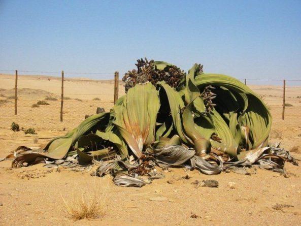 Общество: Ученые из Великобритании рассказали об удивительном бессмертном растении и мира