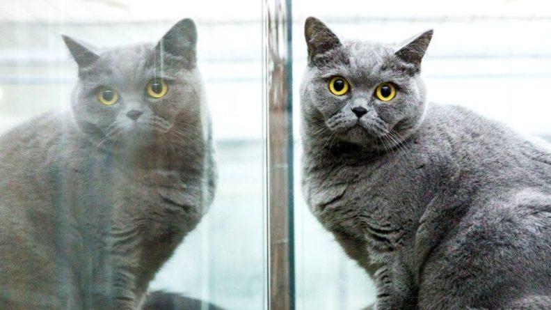 Общество: Более 330 кошек в Великобритании умерли от неизвестного заболевания