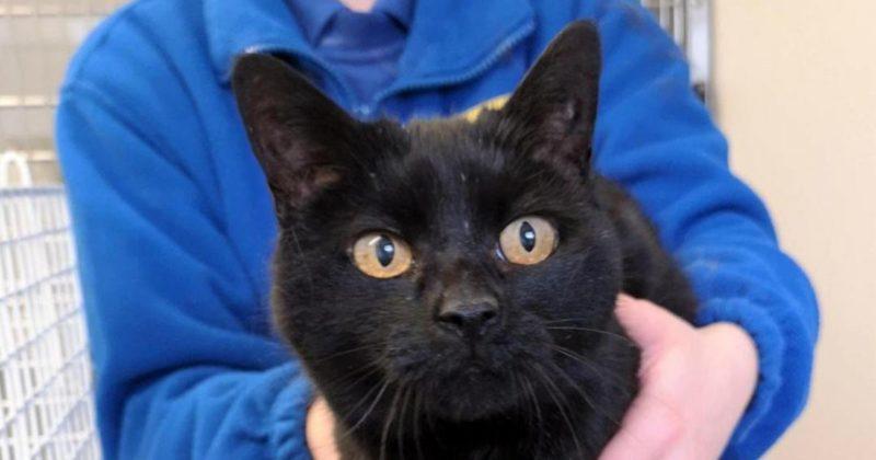 Общество: Более 300 кошек умерли в Великобритании от неизвестной болезни
