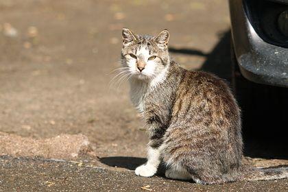 Общество: Более 330 кошек умерли в Великобритании от неизвестной болезни
