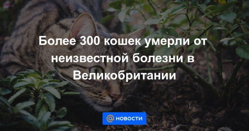 Общество: Более 300 кошек умерли от неизвестной болезни в Великобритании