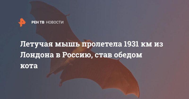 Общество: Летучая мышь пролетела 1931 км из Лондона в Россию, став обедом кота