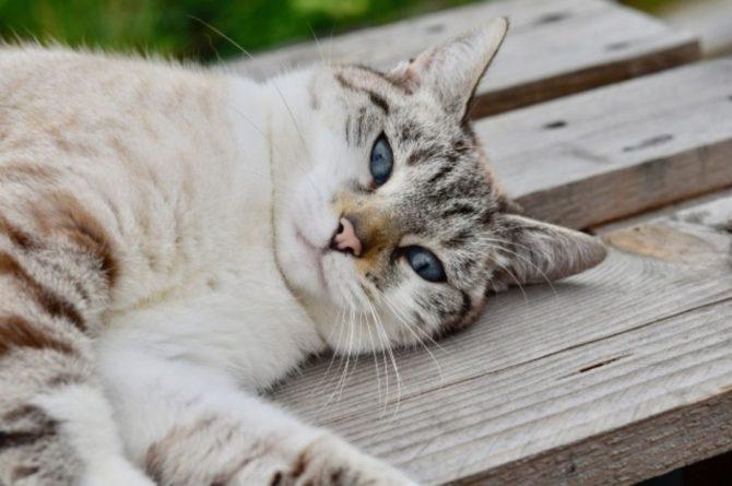 Общество: В Англии нашли кота, пропавшего в 2009 году