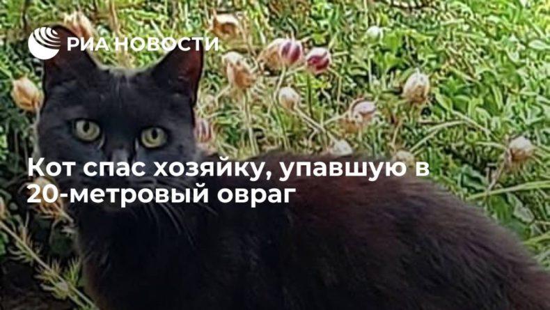 Общество: В Британии кот спас пожилую хозяйку, упавшую в 20-метровый овраг