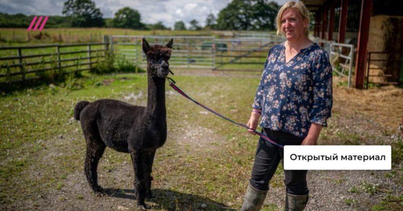 Общество: Джеронимо должен умереть: Маша Слоним о том, почему в Британии после четырех лет суда казнят альпаку