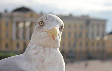 Общество: Видеохит: В Англии чайка ограбила супермаркет