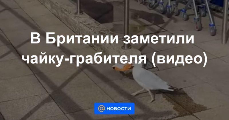 Общество: В Британии заметили чайку-грабителя (видео)