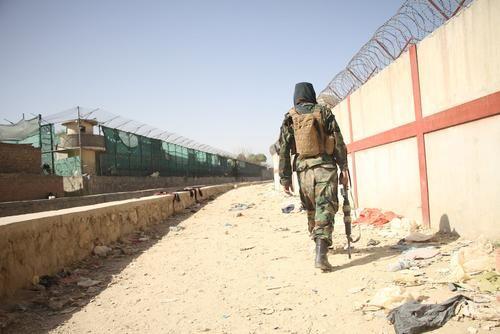 Общество: Минобороны Великобритании отказалось эвакуировать из Кабула собак и кошек